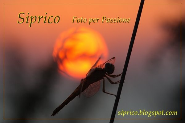 Blog Gestione - Silvano Pricoco