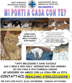 per info 347-2424834 ore pasti - zona Cento (FE)