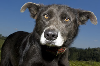 A Lealdade De Um Cão
