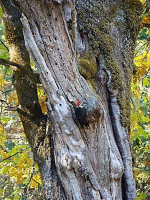 Mossy Oak Property On Wlks Hwy Statesville Nc