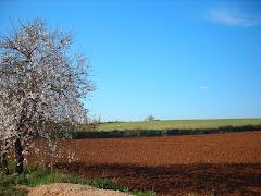 PAISAJES: Parc agrari de Sabadell