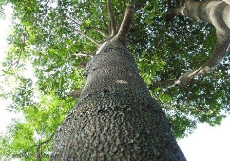 Tanaman/Tumbuhan Langka dan Hampir Punah