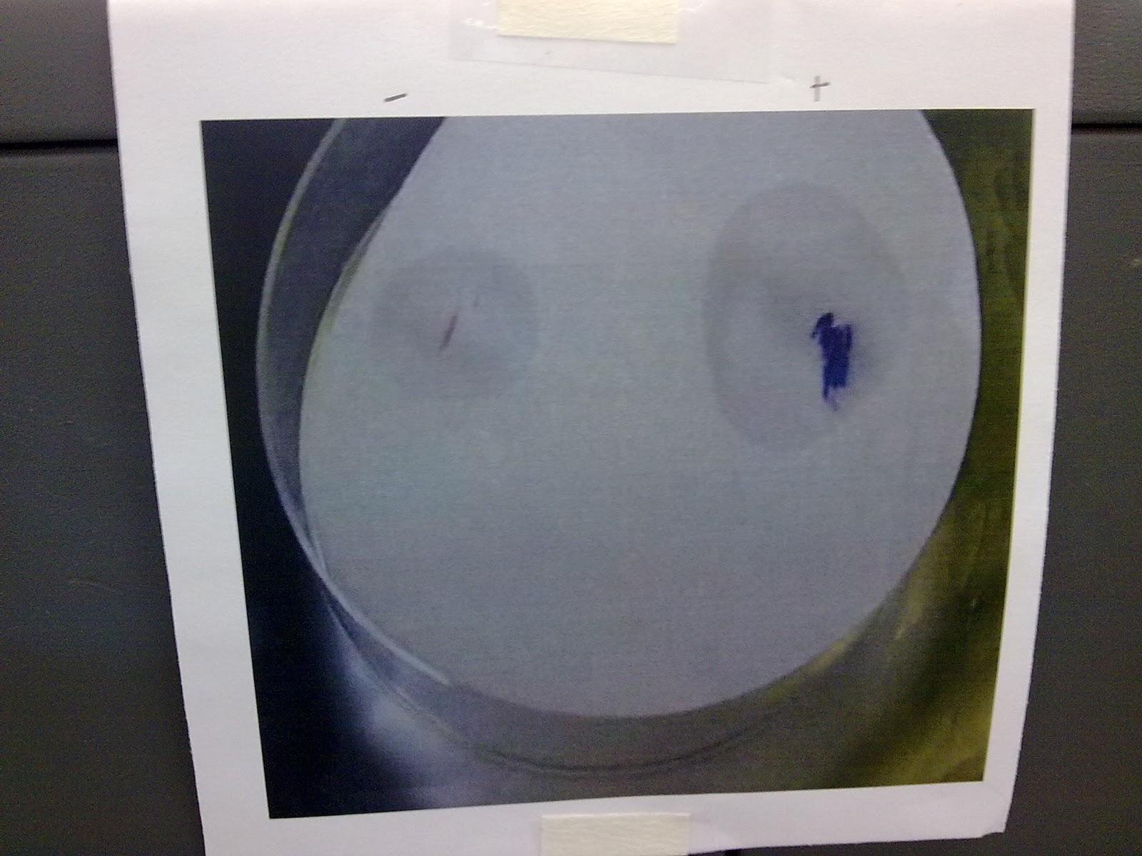 Harpactirinae Biotechnology  Microbes Theoretical Result