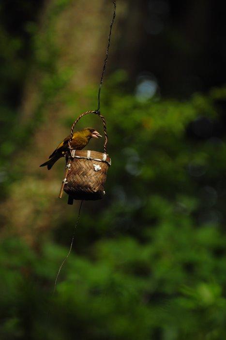 [ガラムの鳥DSC_0009.jpg]