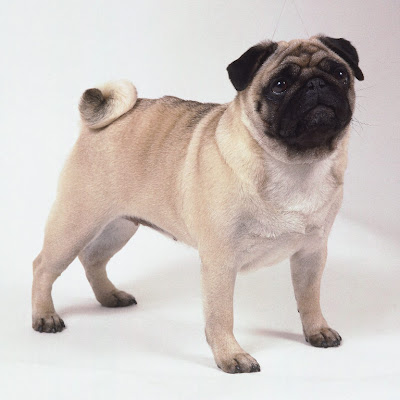 Image Result For Can Dogs Express