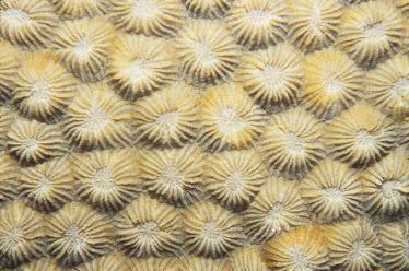 Hard Coral skeleton