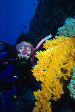Diver and Gorgonian