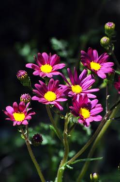 Australian Wildflower #26