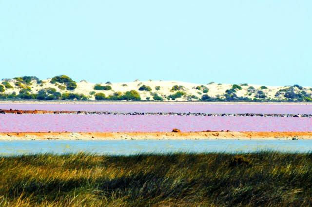 Pink Lake, Hutt Lagoon