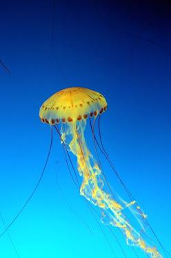 Jellyfish #4
