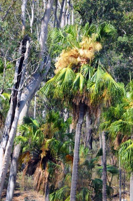 Canarvon Gorge Landscape