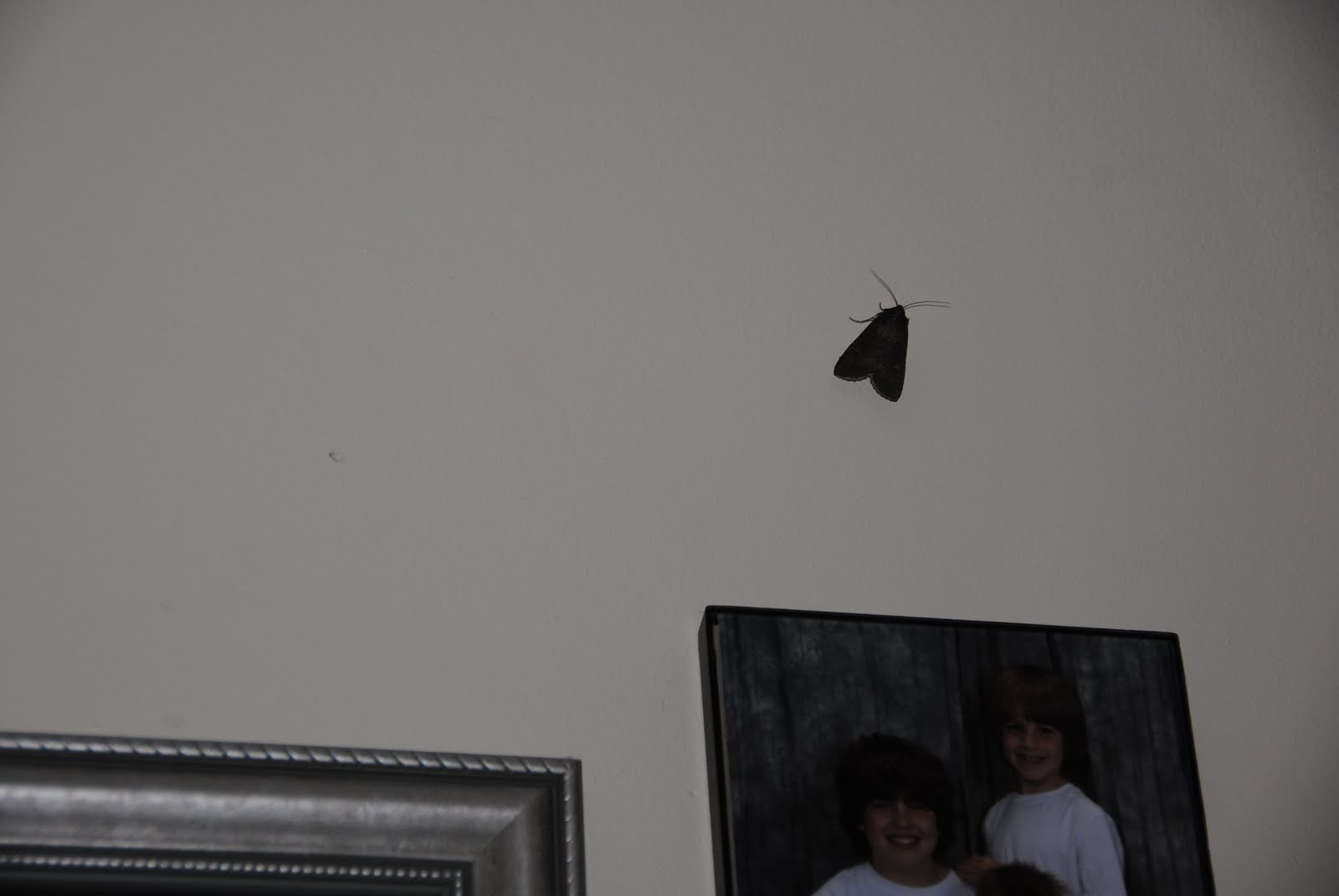 Killer Moth  The Sequel  BatMoth s Revenge. Because I Said So  The official Blog of Author and Mom Blogger