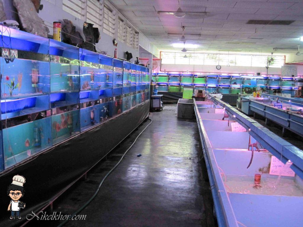 Fish aquarium in johor bahru -