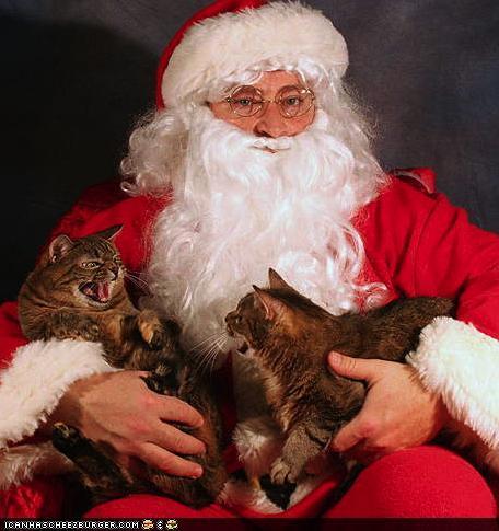 http://4.bp.blogspot.com/_0ppLhuA3OSo/TSFPnjf5XHI/AAAAAAAABb8/-KTq42pnNjc/s1600/cats+fighting+on+Santa%27s+lap.jpg