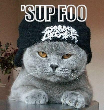 http://4.bp.blogspot.com/_0ppLhuA3OSo/TUTeWe5X4AI/AAAAAAAABeA/cAcJoVVphwY/s1600/cat+sup+foo.bmp
