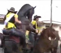 caballo excitado monta jaca