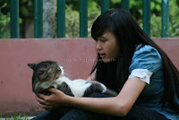 kucing ketiduran, kucing malas, sleepy cat