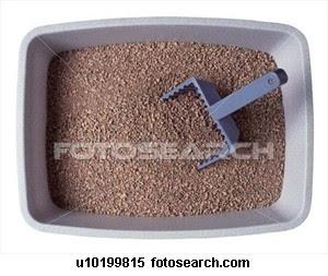 serok pasir kucing, menutup kotoran kucing, mengais pasir