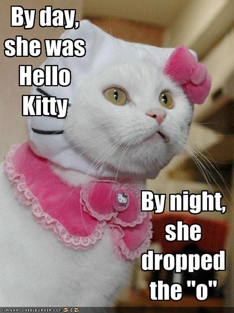 cat in hello kitty