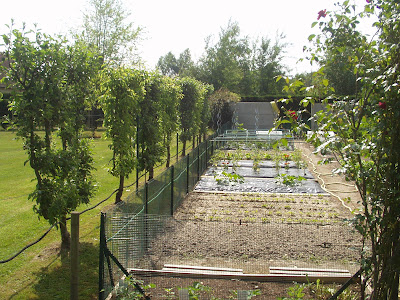 carres potagers