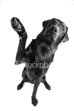 dog high five 5