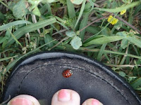 We noticed this free-loading ladybug as we stopped for the state shot.