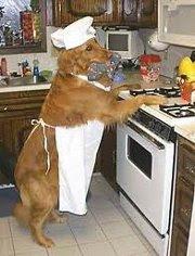 perro cocinando