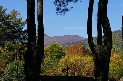 Beautiful fall foliage in the Balsam Mountains seen from our back patio at Brookside Mountain Mist Inn Bed & Breakfast