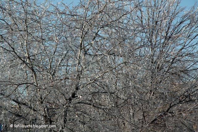alberi ghiacciati