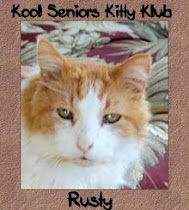 Kool Seniors Kitty Club