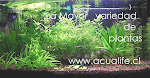 visita nuestro catalo go de plantas