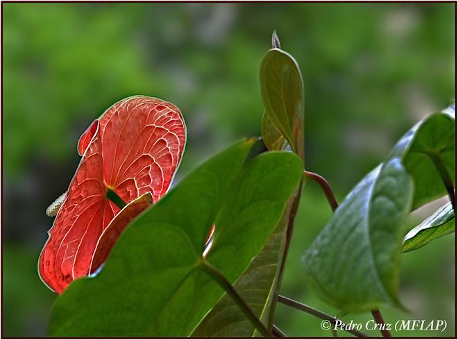 flora venezolana