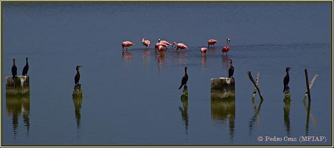 flamencos y cormoranes