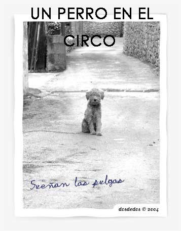 un perro en el circo
