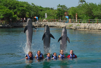 Xel-Ha Dolphin Jumps over in Cancun, Mexico