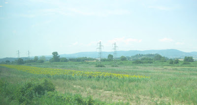 Cruising on the Eurostar train through the country side.  As I remembered -- many vineyards of grapes and orchards of olive trees.  But, what was unexpected was miles of fields of sunflower plants.  I had not realized how extensive the fields are -- beautiful.