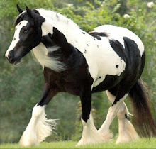 My Favorite Breed of Horse- The Gypsy Vanner