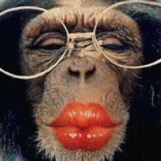 the orang utan: