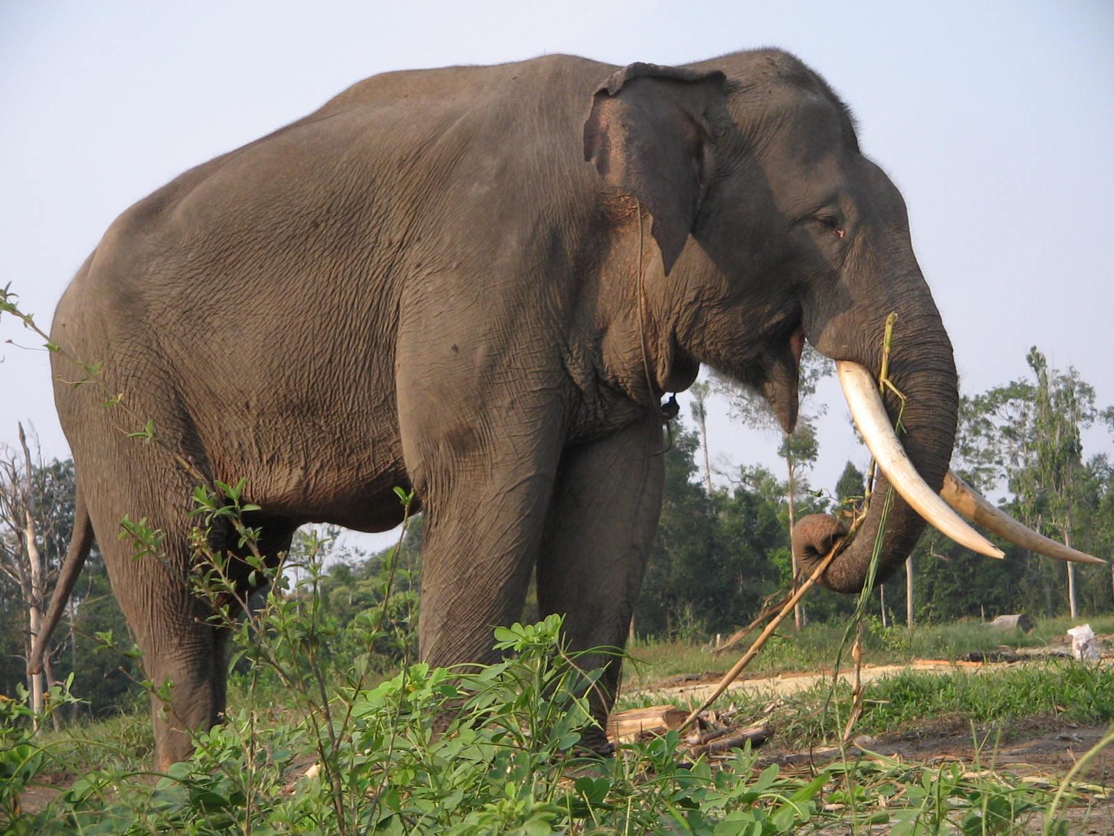 ... Manusia Sesekali Mengalah dengan Gajah? ~ Andi Noviriyanti Journal