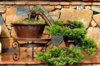 Ideias decoração mobiliário | Bonsai