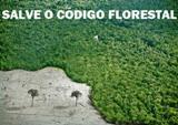 200.000 brasileiros para salvar o Código Florestal.Clique e assine!