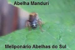 Ab. Manduri