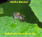 ABELHA MANDURI.