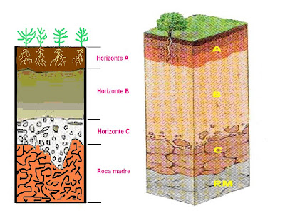 Tics y ciencias naturales el suelo for Como estan formados los suelos