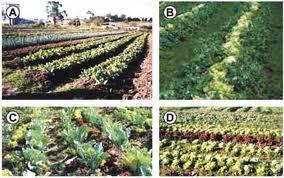 Tecnologos en produccion agricola asociaci n y rotaci n for Rotacion cultivos agricultura ecologica