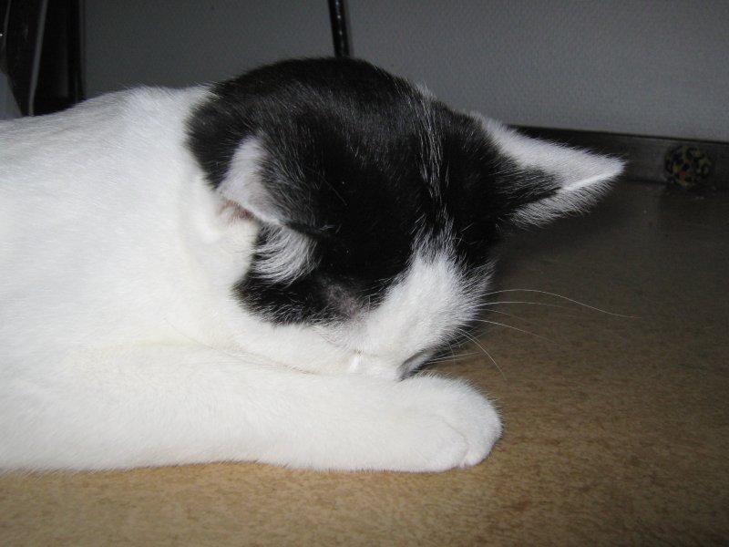 kissan sterilisaatio jälkihoito