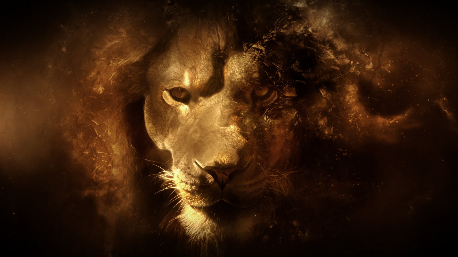 lion hd wallpaper