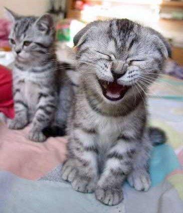 [cute-kitten+jpg]