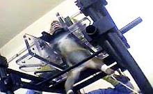 Los horrores de los Laboratorios Covance: La realidad de la experimentación animal