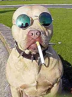 Deem os nomes Cachorro+louco+3